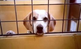 Stort avlslaboratorium dømt for dyremishandling