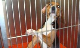 Kloning af kæledyr: vi behøver ikke at ville det, vi kan