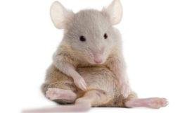 Hjælp forsøgsdyrene – kræv dyrefri testning af botox