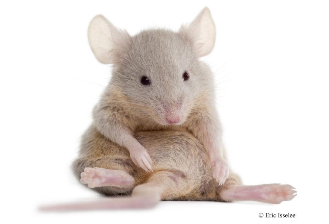 mus til botox med C3