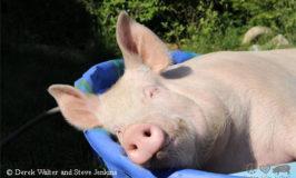 Sidste amerikanske medicinske universitet stopper brugen af dyr i undervisningen