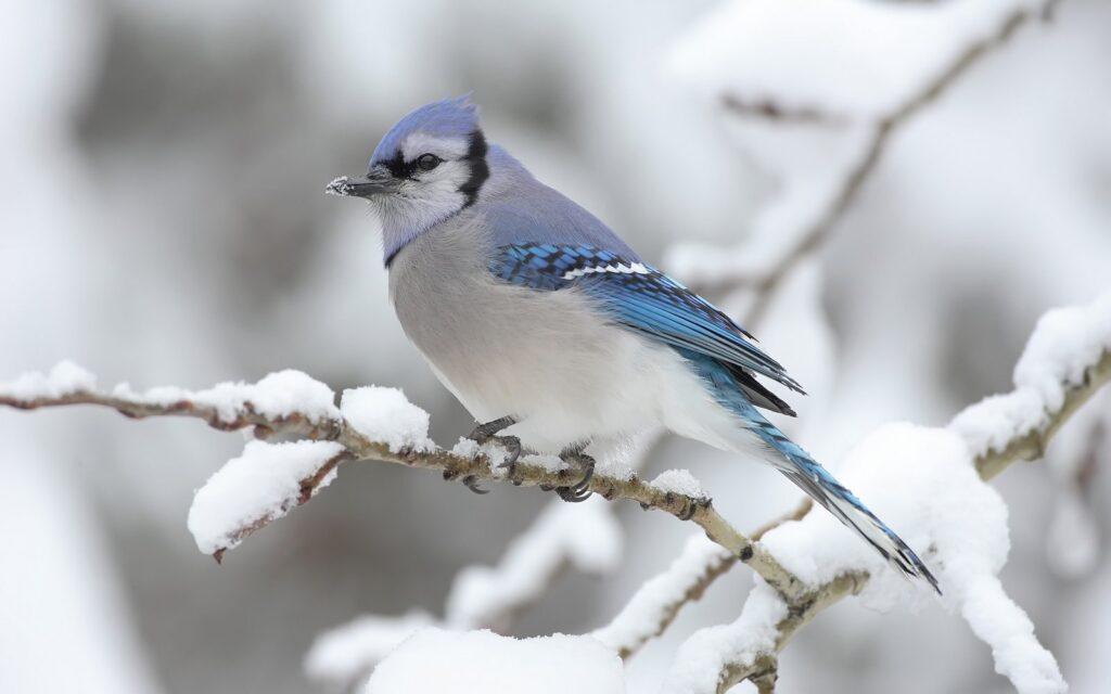 Fugl i sne