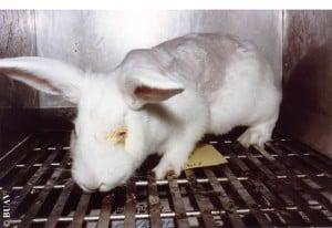 kanin øjentest, BUAV2