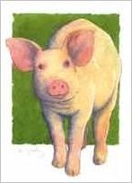 5 kort, gris med kant