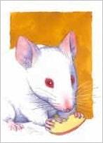 5 kort, mus med kant